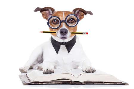 Jack-Russell-Hund liest ein Buch mit Nerd Brille und sah klug und intelligent, isoliert auf weißem Hintergrund