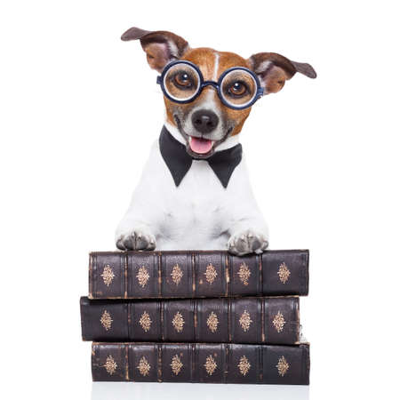jack russell: jack russell dog reading a book with nerd glasses, looking smart and intelligent, isolated on white background