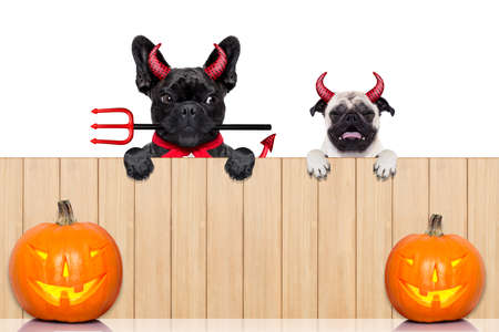 devil horns: row of pumpkin dogs in a row behind a wall of wood dressed as devil demons, isolated on white background