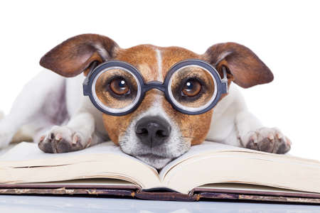page: jack russell dog reading a book with nerd glasses, looking smart and intelligent, isolated on white background