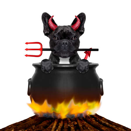 doggies: french bulldog  halloween devil dog burning inside a boiler on a bonfire like a witch, isolated on white background