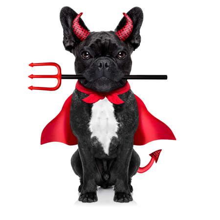 satan: bruja de halloween perro bulldog francés vestida como una mala diablo con capa roja, aislado en fondo blanco