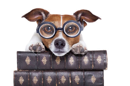 dumb: jack russell dog reading a book with nerd glasses, looking smart and intelligent, isolated on white background