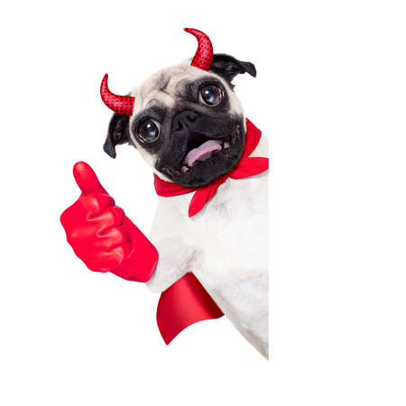 treat like a dog: halloween devil pug dog  hiding behind white empty blank  banner or placard ,thumb up ,isolated on white background Stock Photo