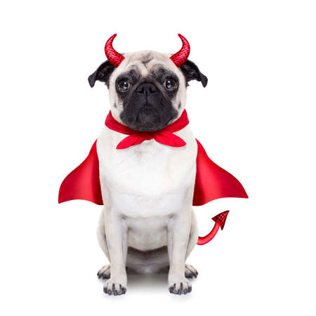 french horn: halloween devil pug dog  with red cape, isolated on white background