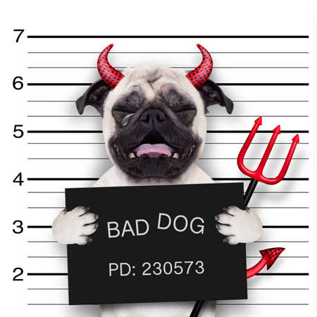 Halloween-Teufel-Mops Hund weint in einem Mugshot, fing an mit Foto-Kamera, in Polizeiwache Gefängnis