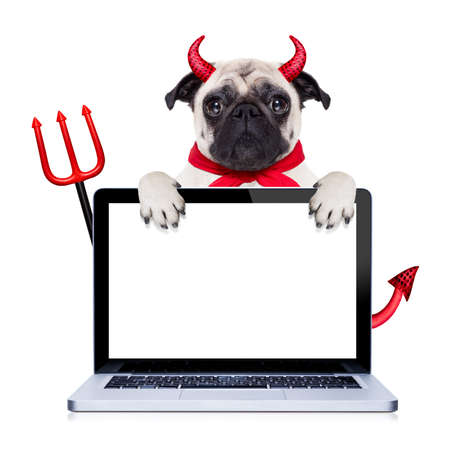 halloween devil pug dog  hiding behind empty blank  pc computer laptop screen , isolated on white background