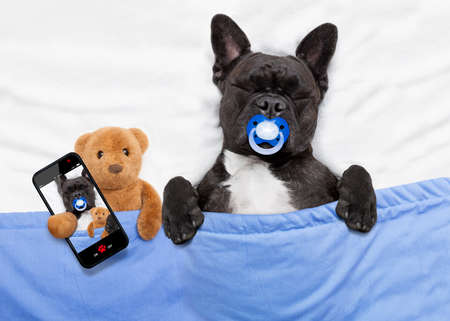 animals together: french bulldog dog  with  headache and hangover sleeping in bed like a baby with pacifier