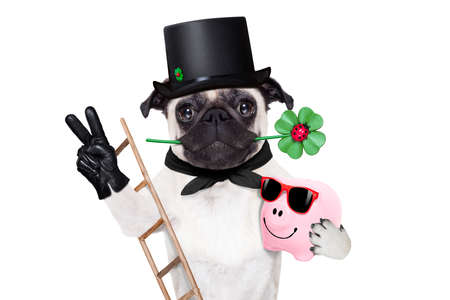 black dog: pug dog as chimney sweeper with four leaf clover  celebrating and toasting for new years eve isolated on white background