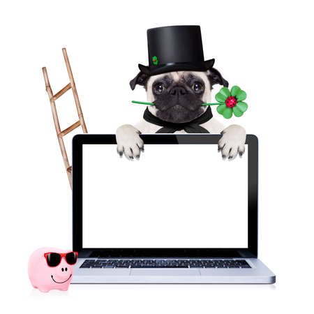 sweeper: pug dog as chimney sweeper with four leaf clover  behind white pc laptop computer screen , celebrating and toasting for new years eve, isolated on white background