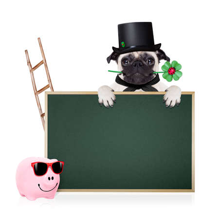chimney sweep: pug dog as chimney sweeper with four leaf clover  behind blackboard or placard,  celebrating and toasting for new years eve, isolated on white background