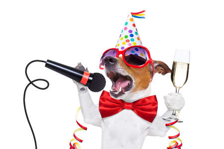 jack russell dog celebrating new years eve with champagne and singing karaoke with a microphone, isolated on white background 스톡 콘텐츠