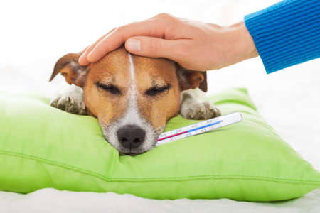 owner petting his dog, while he is sleeping or resting , feeling sick and ill with temperature and fever, eyes closed