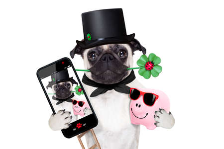 camera phone: pug dog as chimney sweeper with four leaf clover  taking a selfie and toasting for new years eve, isolated on white background