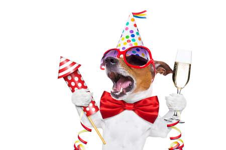 jack russell hond vieren oudejaarsavond met champagne en zingen uit luid, met een vuurwerk raket, geïsoleerd op een witte achtergrond Stockfoto