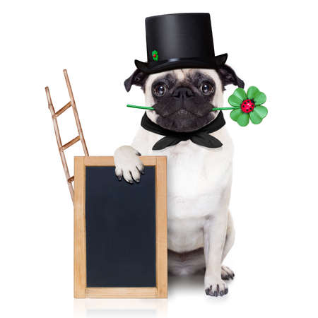 sweeper: pug dog as chimney sweeper with four leaf clover  behind blackboard or placard, celebrating and toasting for new years eve, isolated on white background