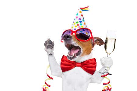 perros graciosos: jack russell perro celebrar Nochevieja con champán y cantando en voz alta, aisladas sobre fondo blanco