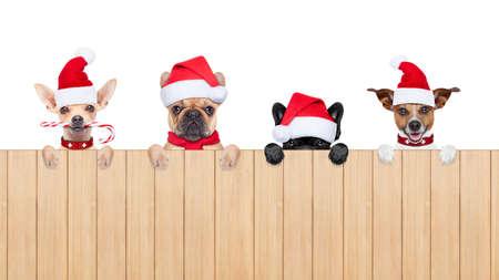 navidad: fila y el grupo de Santa Claus, los perros para las vacaciones de Navidad, detrás de una pared, bandera o pancarta, con un sombrero rojo, aislado en fondo blanco