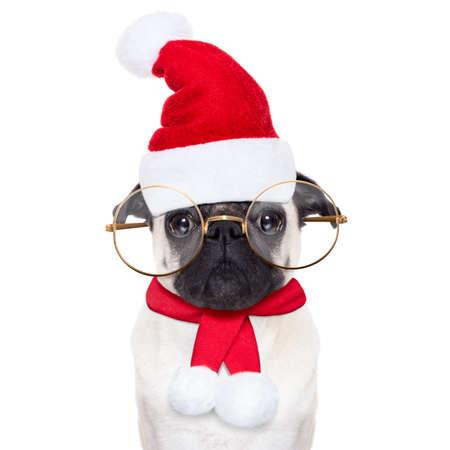 weihnachtsmann lustig: Smart-Mops Hund als Weihnachtsmann mit gro�en Gl�sern, f�r Weihnachtsfeiertage, auf der Suche dumm, isoliert auf wei�em Hintergrund