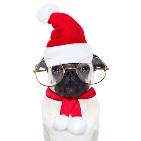 smart pug dog as santa claus with big glasses, for christmas holidays, looking dumb, isolated on white background