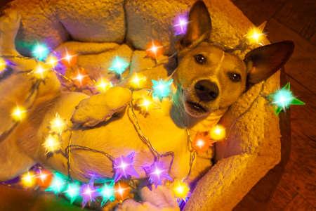 kerze: Hund mit Lichterkette am Weihnachten Lizenzfreie Bilder