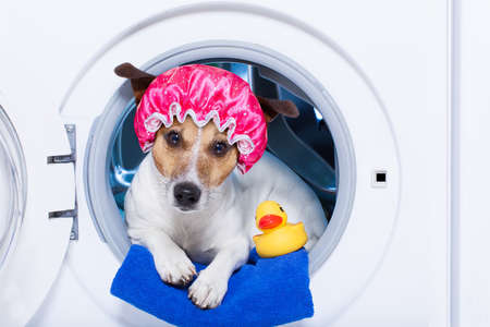 dog inside a washing machine ready to clean the  dirt, wearing a shower cap , towel and rubber duck as companion Stock Photo