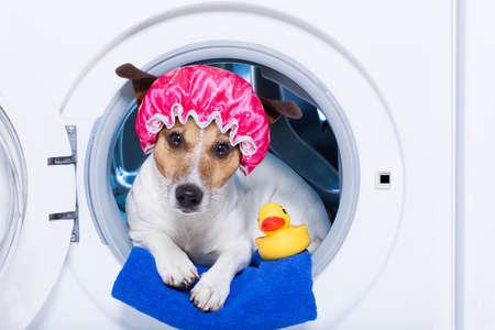 perros graciosos: perro dentro de una lavadora listo para limpiar la suciedad, que llevaba una gorra de baño, toalla y pato de goma como compañero Foto de archivo