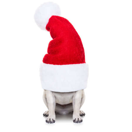 christmas costume: pug dog as santa claus  hiding inside the hat , for christmas holidays, isolated on white background Stock Photo