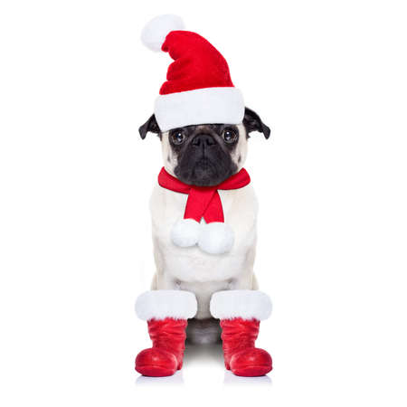 santa hat: pug dog as santa claus with red boots, for christmas holidays, looking dumb, isolated on white background Stock Photo