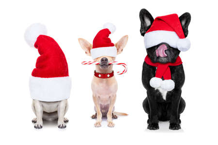 holiday pets: row and group of santa claus dogs, for christmas holidays, eyes covered by the hat , isolated on white background