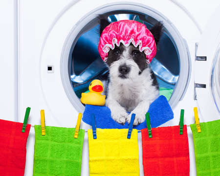 dog inside a washing machine ready to do the chores and homework or housework and clean the  dirt, wearing a shower cap , towel and rubber duck as companion