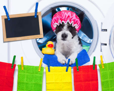 clean: dog inside a washing machine ready to do the chores and homework or housework and clean the  dirt, wearing a shower cap , towel and rubber duck as companion