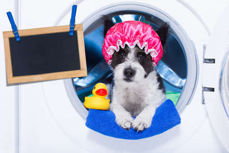 placard: dog inside a washing machine ready to do the chores and homework or housework and clean the  dirt, wearing a shower cap , towel and rubber duck as companion