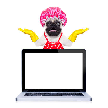 chores: pug dog doing household chores with rubber gloves and shower cap behind a laptop pc computer screen