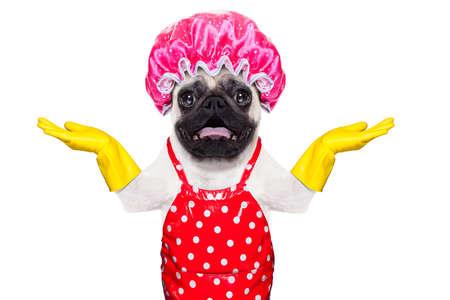 servicio domestico: perro pug haciendo las tareas del hogar con guantes de goma y gorro de ducha, aislado en fondo blanco