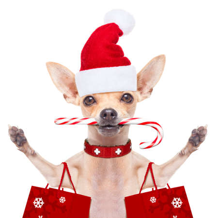 puppy dog: chihuahua santa claus shopping bag  dog  ready for christmas sale  , isolated on white background