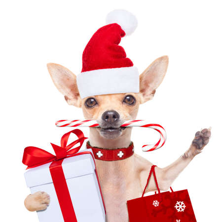 holiday pets: chihuahua santa claus shopping bag  dog  ready for christmas sale  , isolated on white background
