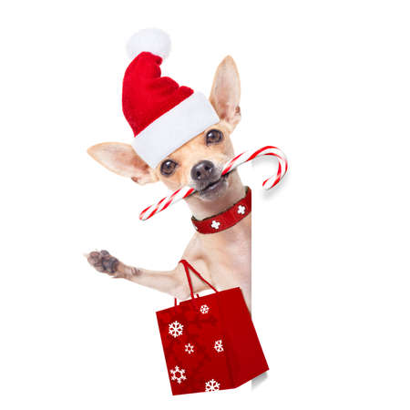 celebration: chihuahua santa claus shopping bag  dog behind a blank empty placard or banner,  for christmas sale discount , isolated on white background Stock Photo