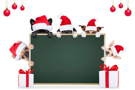 row and group of different santa claus dogs behind an empty blank banner , placard or blackboard, for christmas holidays isolated on white background Stock Photo