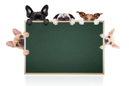 blackboard: group row of different dogs behind a blank banner placard blackboard, isolated on white background