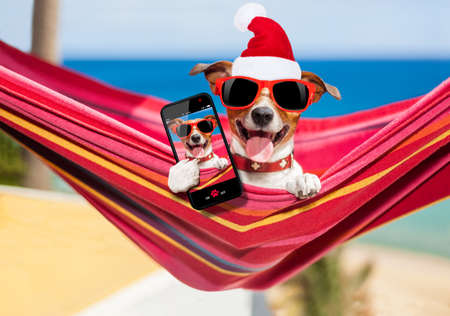 dog relaxing on a fancy red  hammock taking a selfie on christmas holidays wearing a santa claus red hat Stock fotó