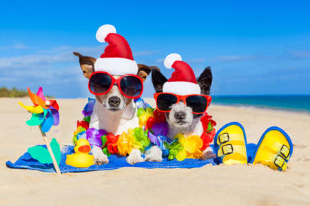 holiday pets: couple of two dog sitting close together wearing santa claus hat at  beach on summer christmas vacation holidays, on a honeymoon retreat