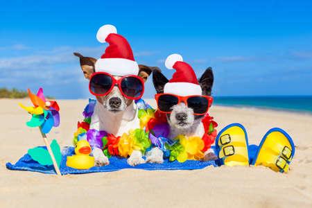 Paar von zwei Hund sitzt eng zusammen das Weihnachtsmann-Hut am Strand auf Sommerweihnachtsferien Urlaub, auf Hochzeitsreise Rückzug