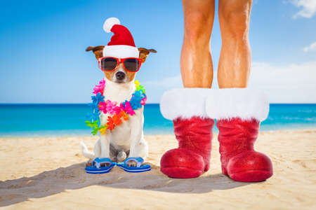 dog and owner sitting close together at the beach on summer christmas vacation holidays, wearing a santa claus hat and red boots