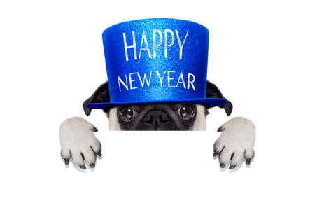 pug dog  toasting for new years eve with hat , behind blank white banner , blackboard or placard, isolated on white background
