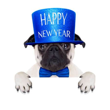 year's eve: pug dog  toasting for new years eve with hat , behind blank white banner , blackboard or placard, isolated on white background