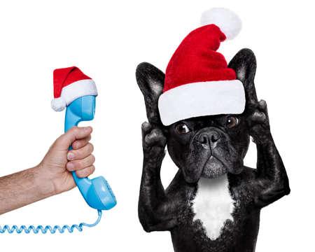 bulldog: franc�s bulldog escuchar cuidadosamente lo que tiene que decir, aislado sobre fondo blanco en �poca de Navidad con sombrero de Santa Claus