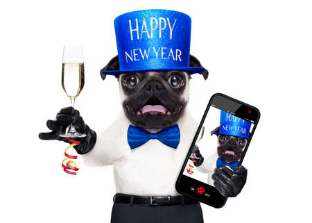 pug dog  toasting for new years eve with champagne glass , taking a selfie, isolated on white background