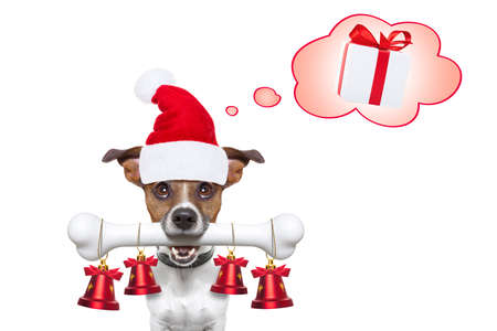 dog christmas: Santa Claus dog with red hat  with big bone in mouth , ornament christmas bells hanging and thinking of presents and gifts , isolated on white background