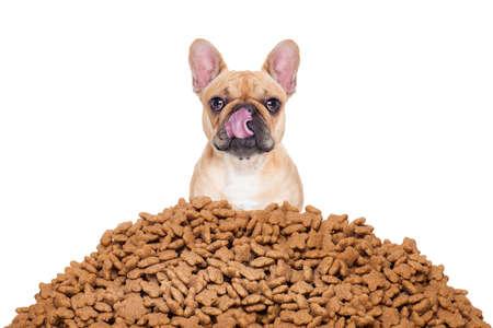 galletas: perro bulldog hambre detrás de un gran montículo o grupo de alimentos, aislado en fondo blanco